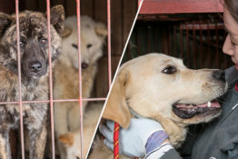 Dog meat market shut down