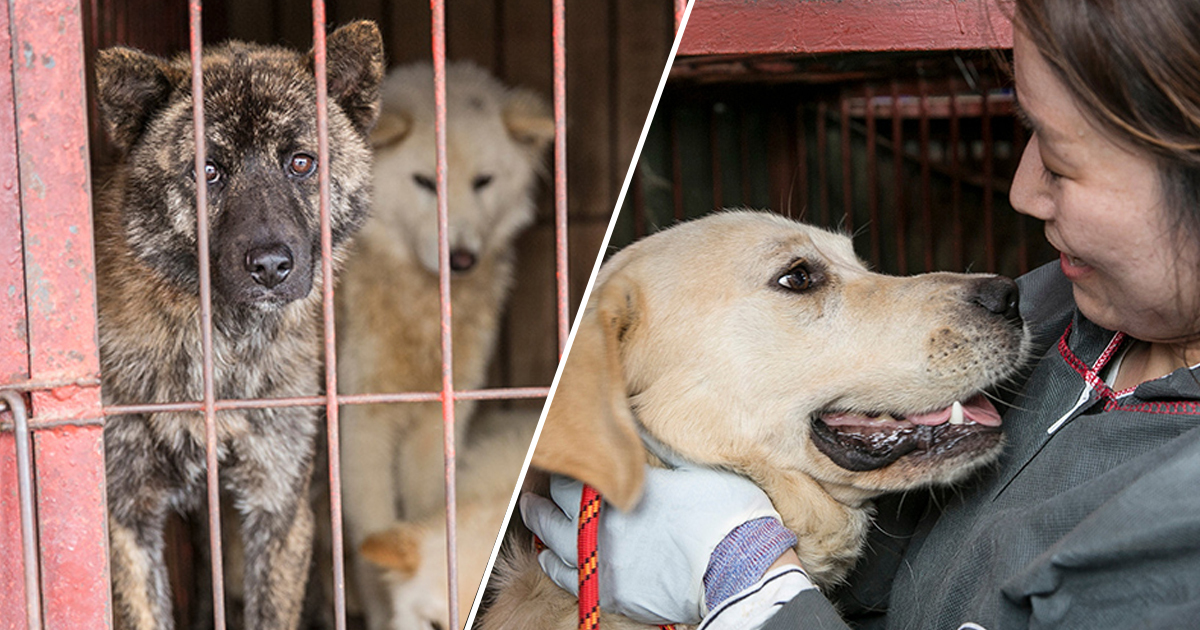 Busan Dog Meat Market Finally Shut Down Once And For All