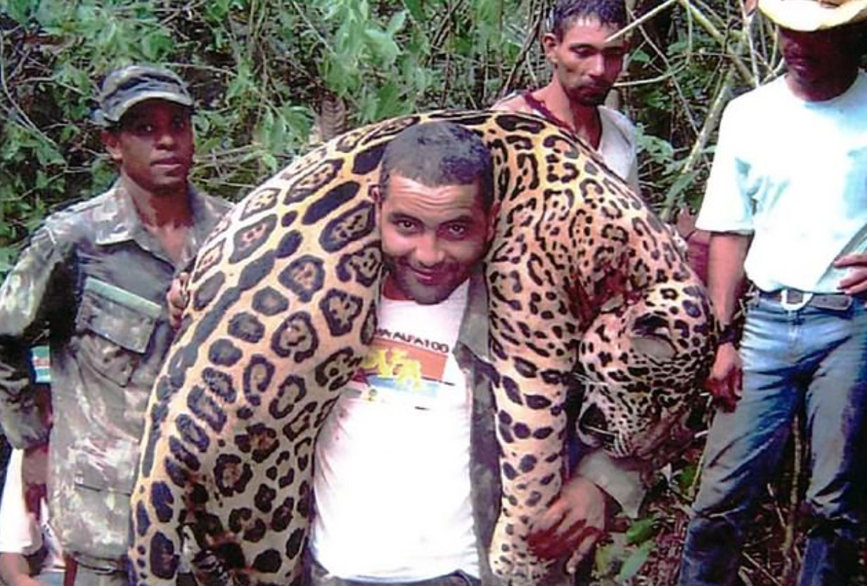 Dentist accused of killing jaguars