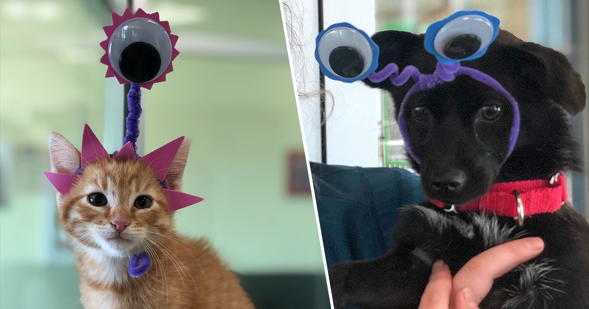 Animal shelter wants you to raid them instead of area 51
