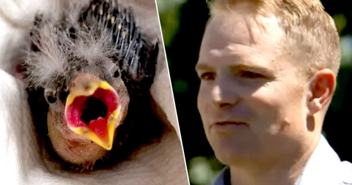 Drunk Man Who Can't Drive Sends Struggling Baby Bird To Rescue Centre In Uber