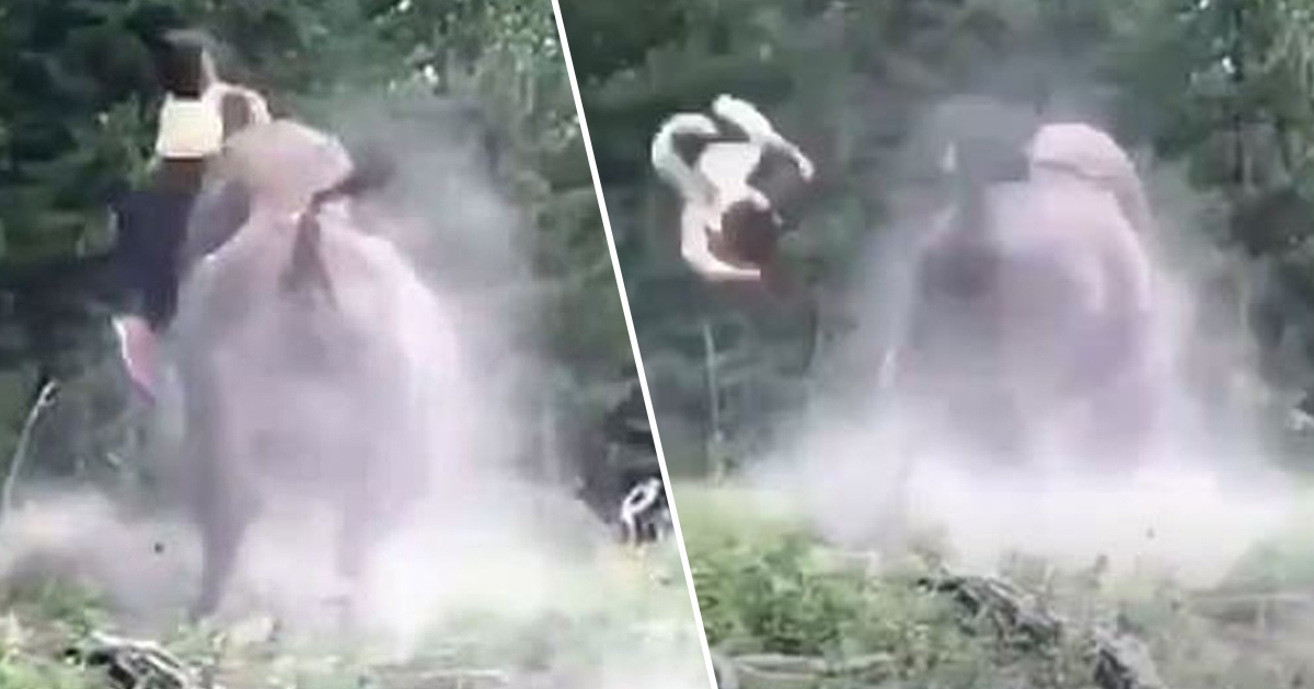 bison throws girl into air