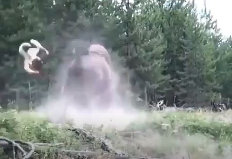 Young girl thrown into the air as bison charges