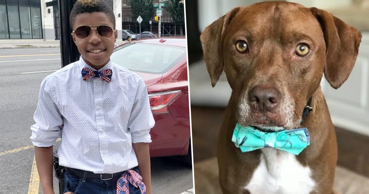 Boy makes bow ties for shelter animals