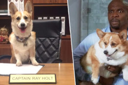 The Dog Who Played Cheddar In Brooklyn Nine-Nine Has Passed Away