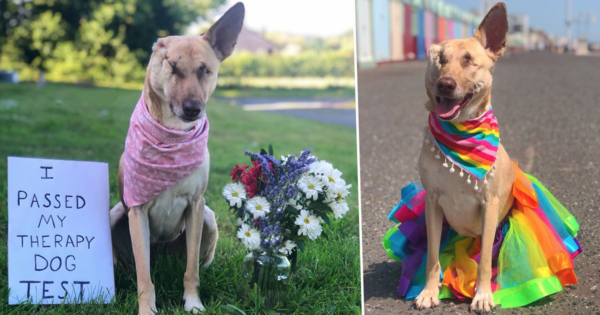 Pregnant Dog Shot 17 Times And Abandoned On Streets Becomes Therapy Dog