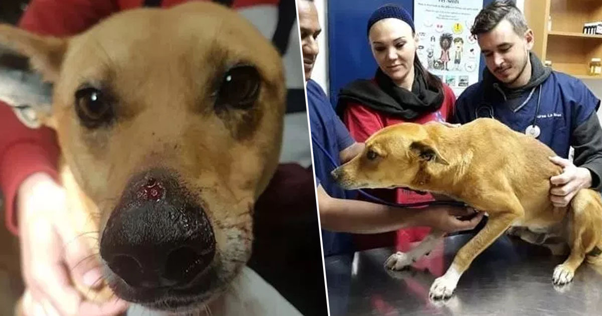 Dog Shot In Face After Protecting Family From Armed Carjackers