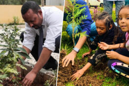tree planting initiative in Ethiopia