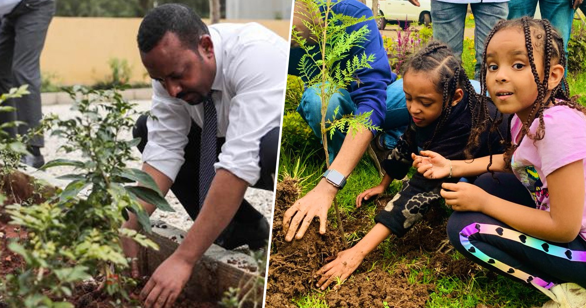 Image result for Ethiopia Sets New Tree-planting Record To Fight Climate Change
