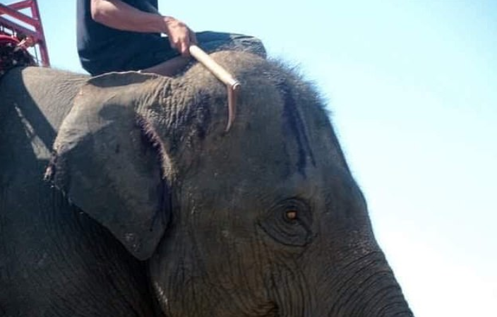 Tourists Urged Not To Ride Elephants In Thailand As Horrific Photos Emerge