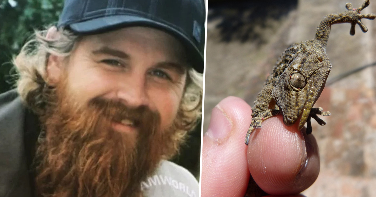 Man 'Dared To Eat Gecko' Dies 10 Days Later From Salmonella Infection