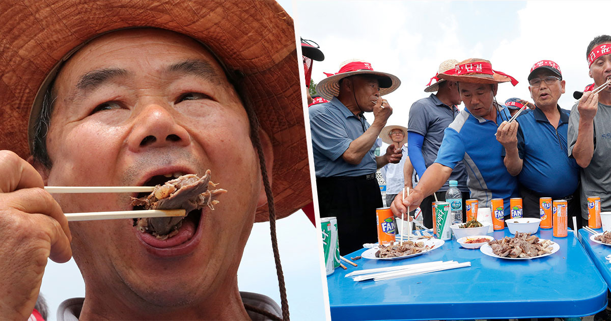 South Koreans Eat Dog Meat At Protest 'Defending Right To Consume Their Delicacy'
