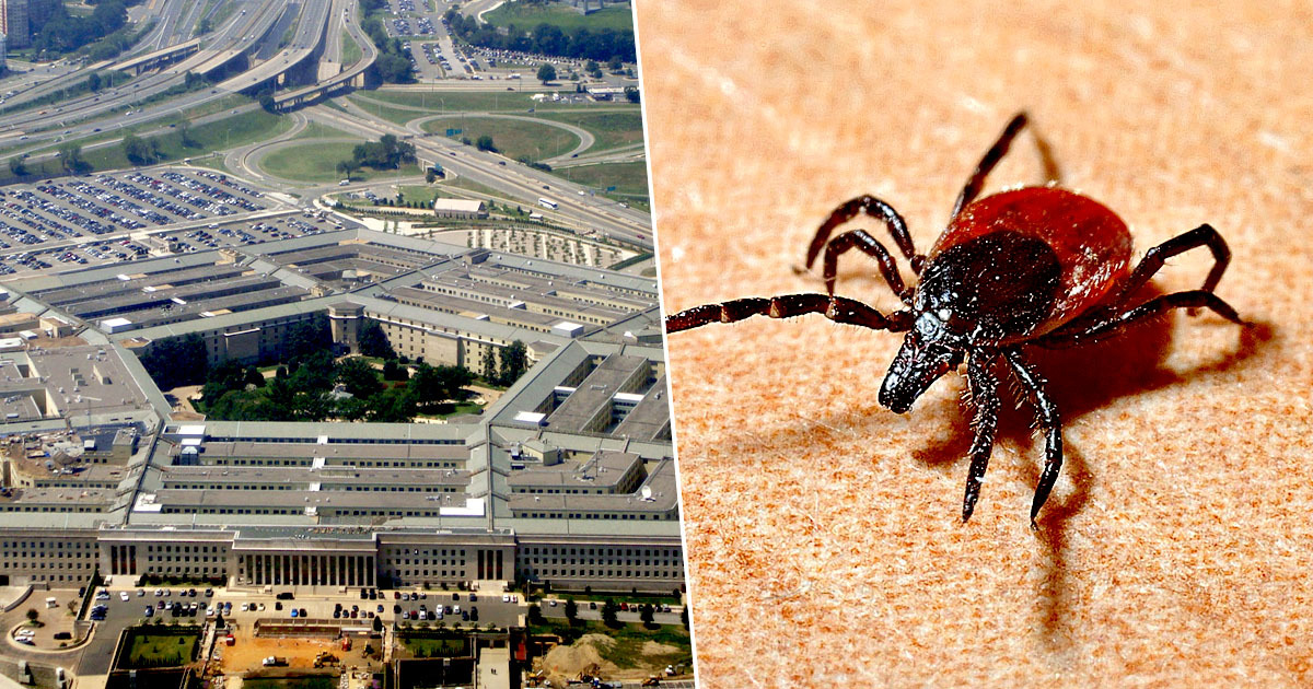 Pentagon Ordered To Investigate If It Released Weaponised Ticks On US Public