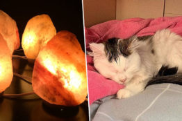 salt lamps/cat at vet