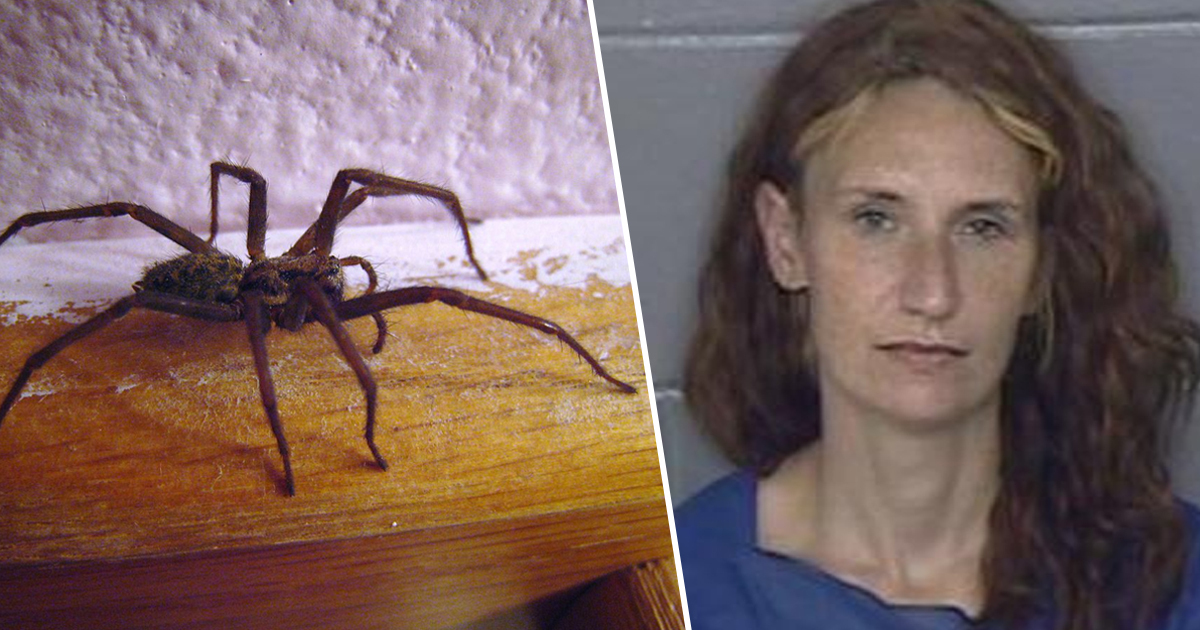 Woman 'Set House On Fire After Finding Big Spider'