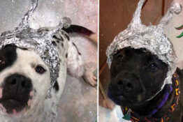 dogs for adoption in tin-foil hats at Oklahoma animal welfare