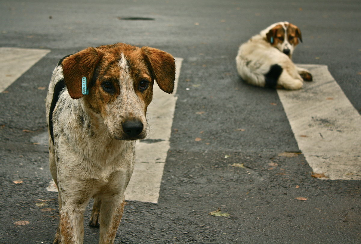 Thousands Of Animals Left To Roam The Street Due To Overpopulation Each Year