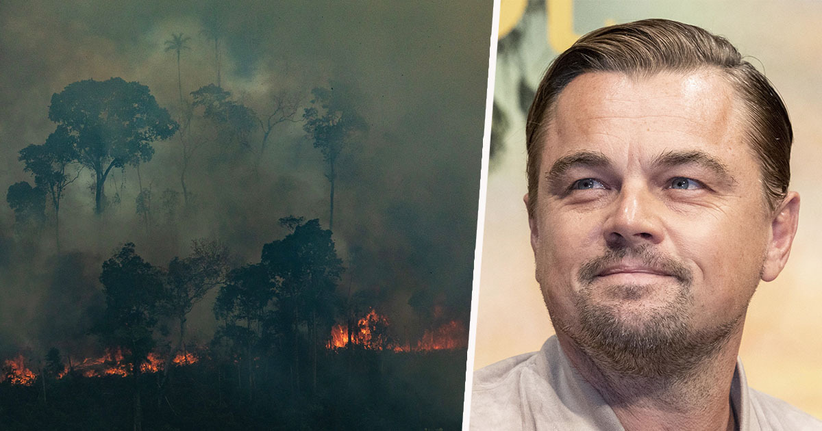 Leonardo DiCaprio's Earth Alliance Donates $5 Million To Amazon Fire Effort
