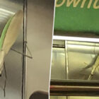 'Gigantic' Praying Mantis Hilariously 'Terrorises' New York City Train