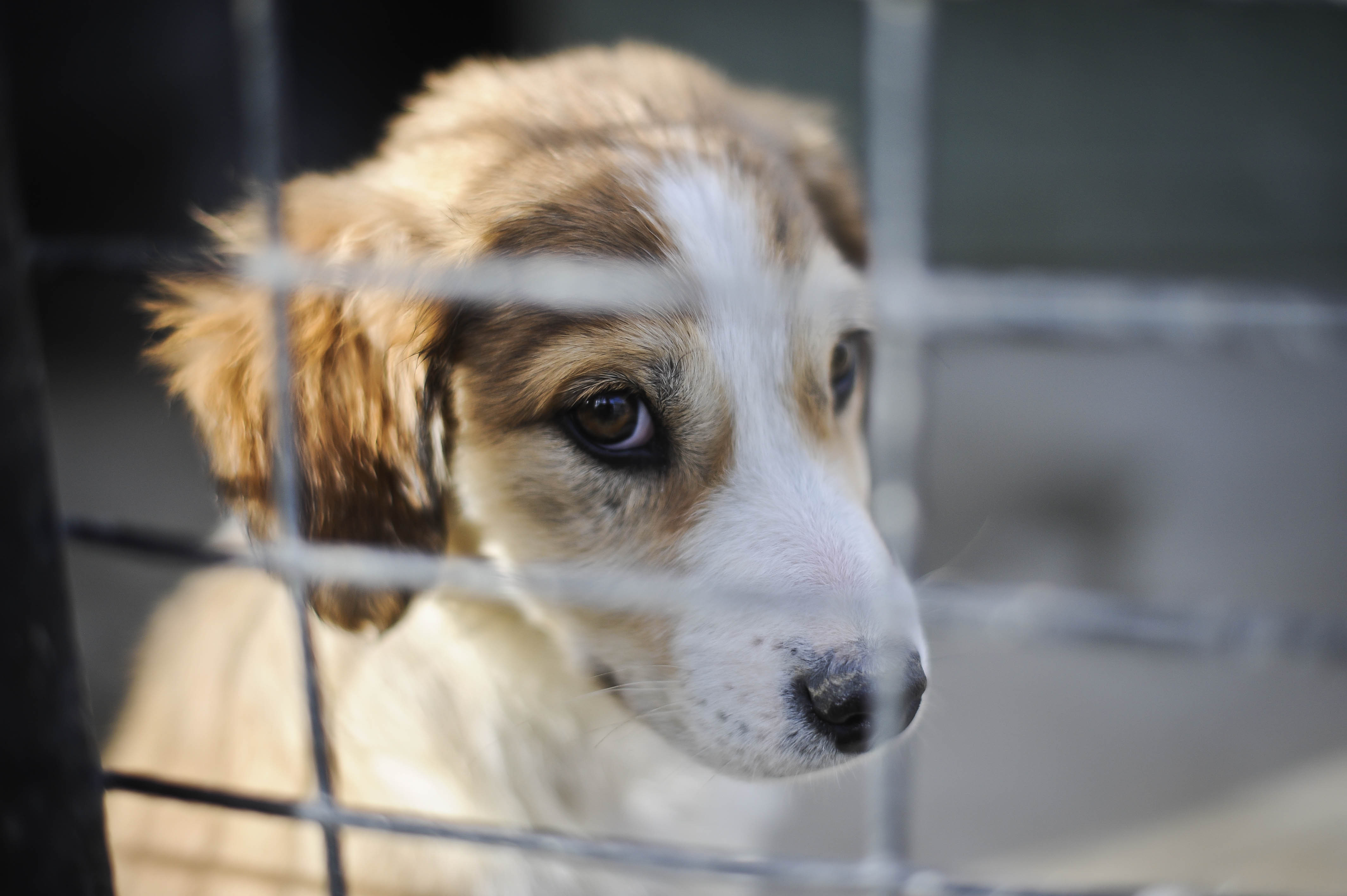 Puppy farming reports on the rise