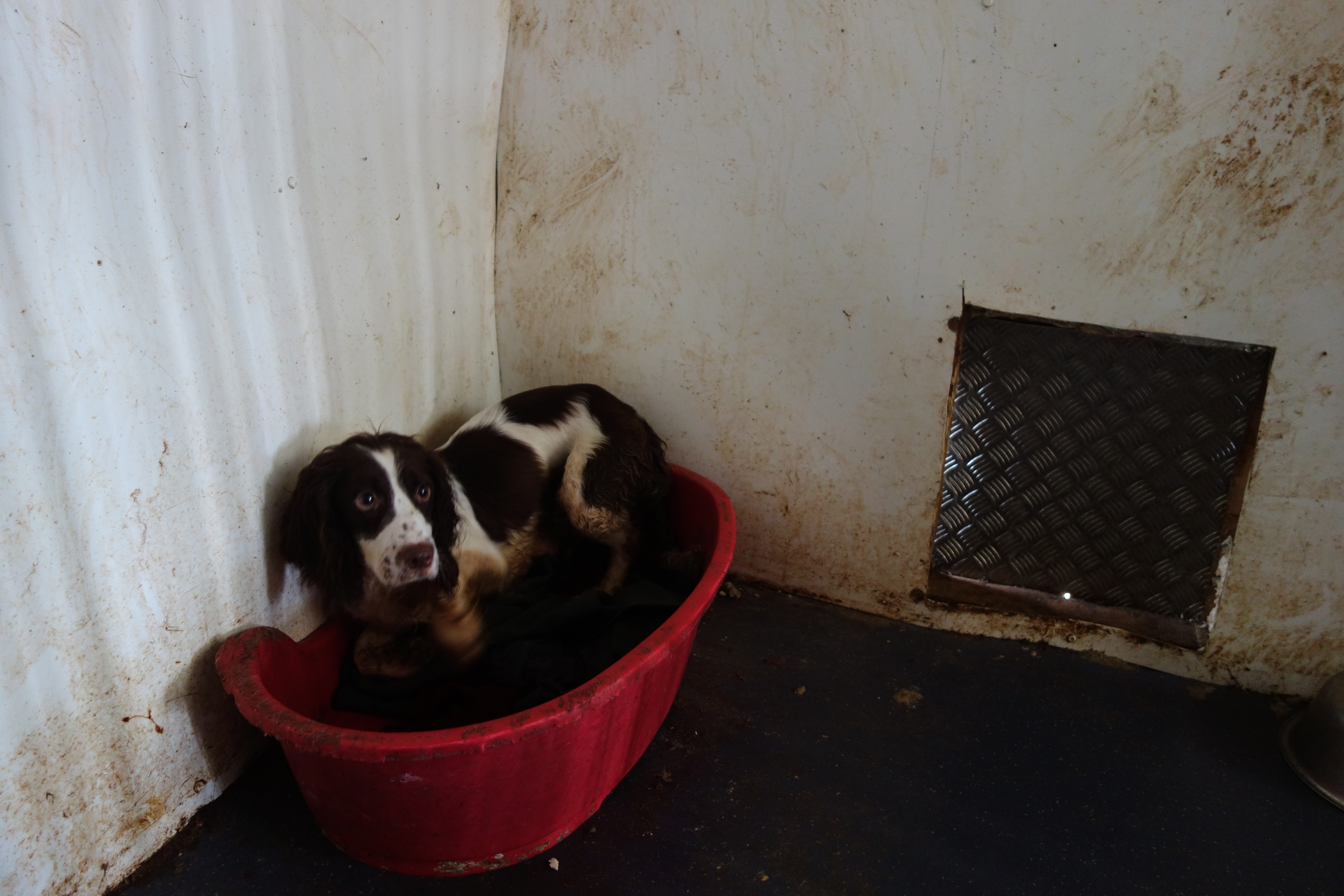 Puppy farming reports increase