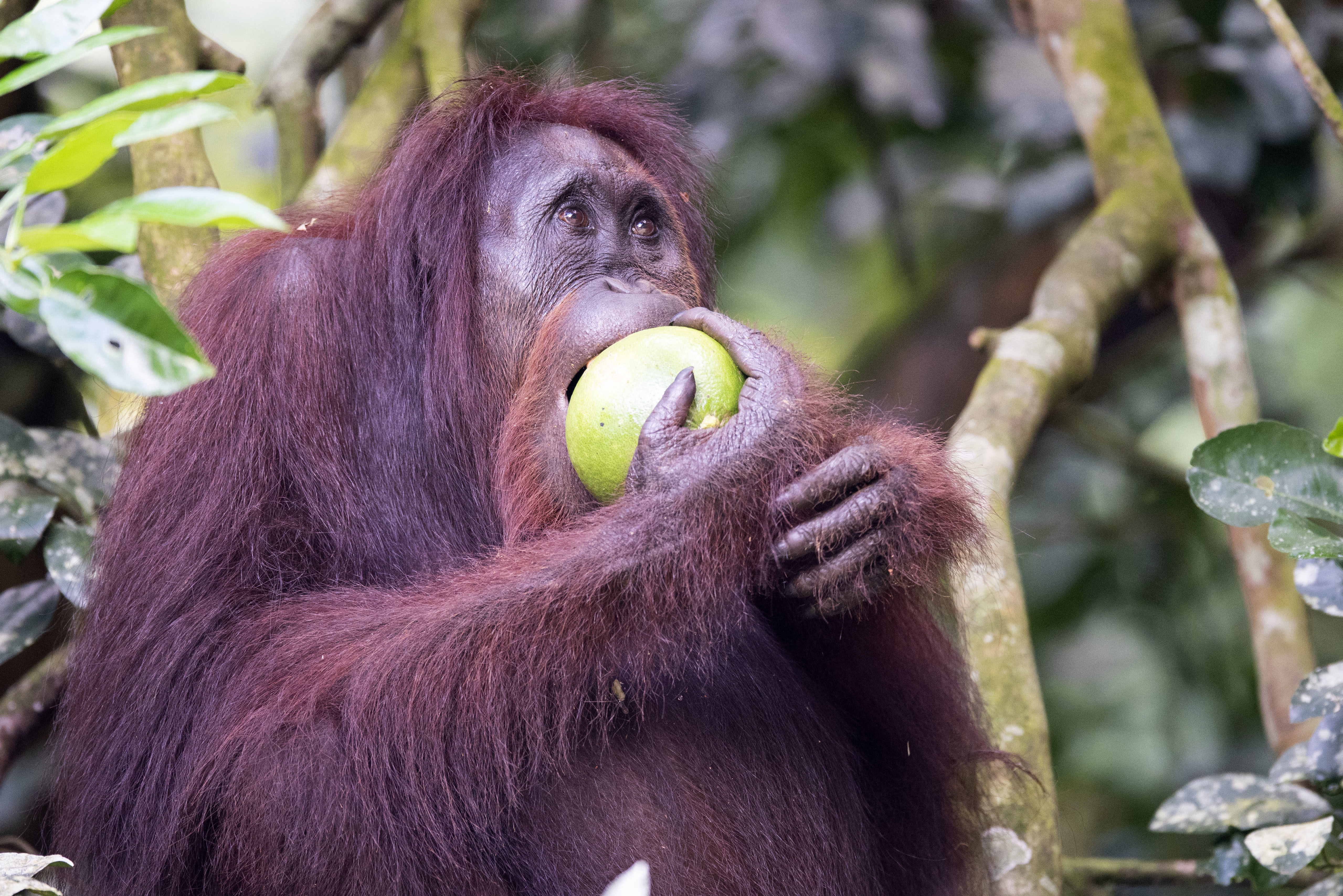 Peru Passes Momentous Ban On Palm Oil Deforestation