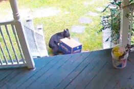 Bear steals package of dog food from porch