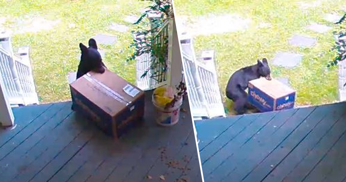 Bear Steals Massive Package Of Dog Food From Family's Front Porch