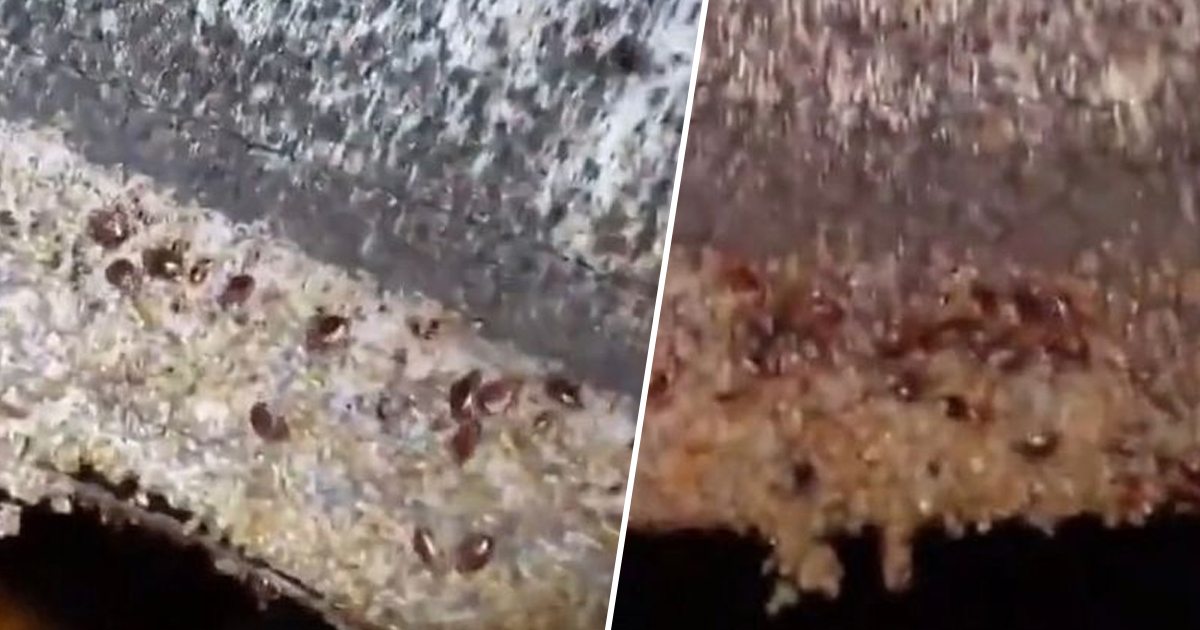 'worst case ever' of bed bugs