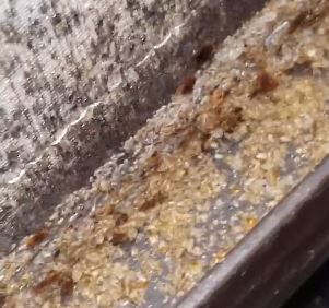 'worst case ever' of bed bugs found on mattress