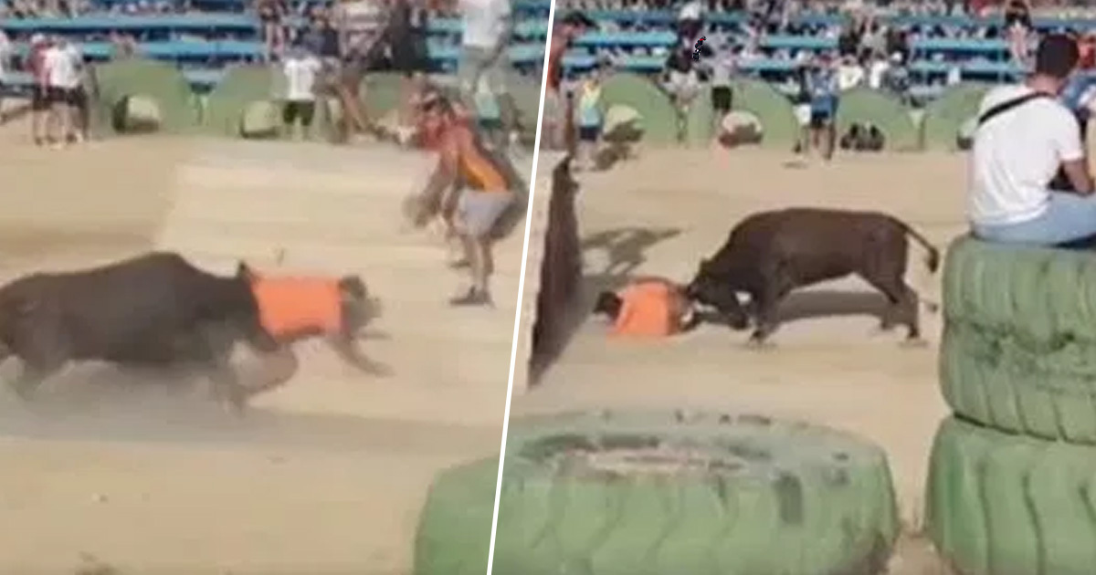 Man Bleeds To Death After Bull Repeatedly Gores Him At Spanish Festival