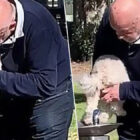 Sickening Moment Man Washes Dog's Bum In Water Fountain