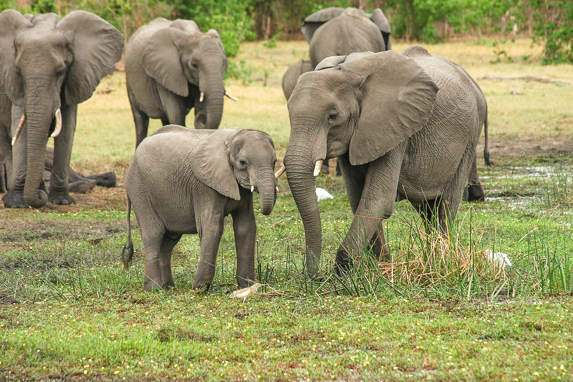 Near-Total Ban On Sending Wild Elephants To Zoos Approved