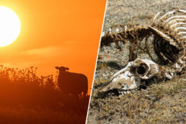 July 2019 On Track To Be Hottest Month Ever Recorded On Earth