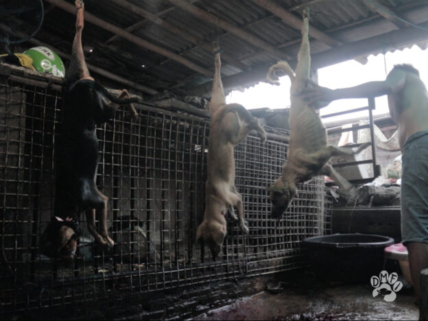 Dogs hung in meat markets