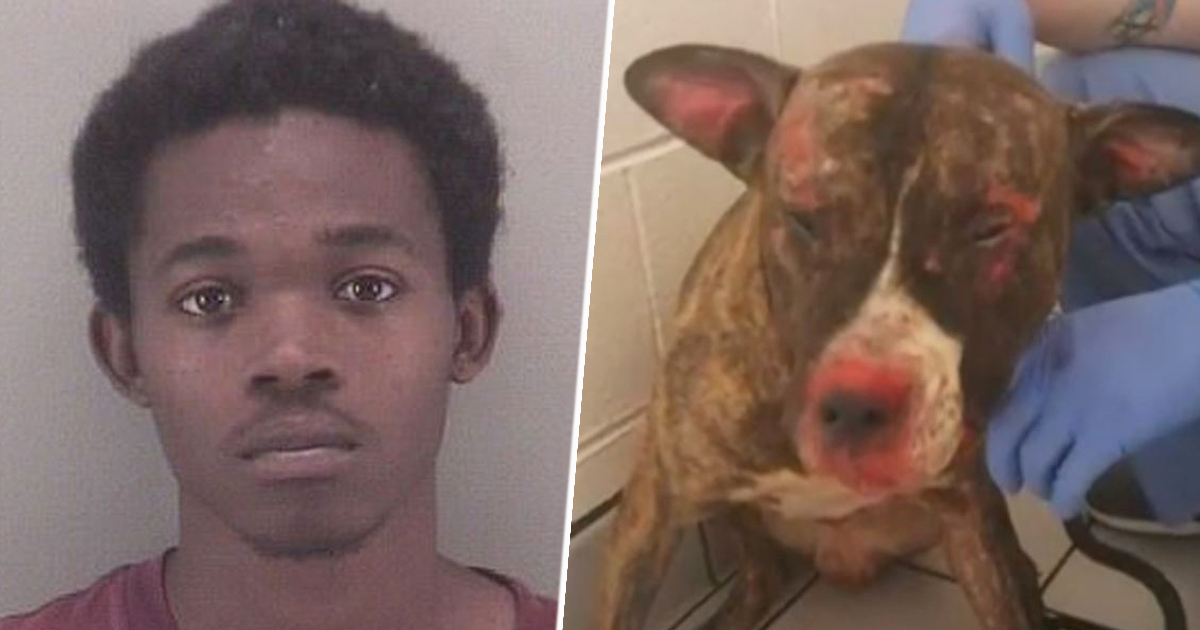 Man Killed Pet Dog By Setting It On Fire After The Pup Bit His Daughter