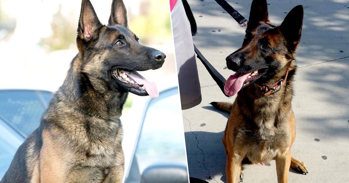 K-9 dies after being left in hot car