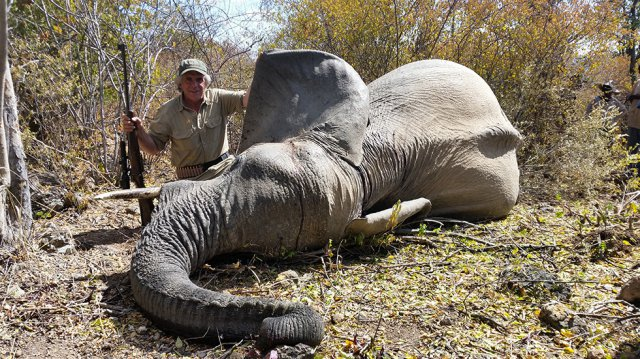 Trophy hunter posing with elephant