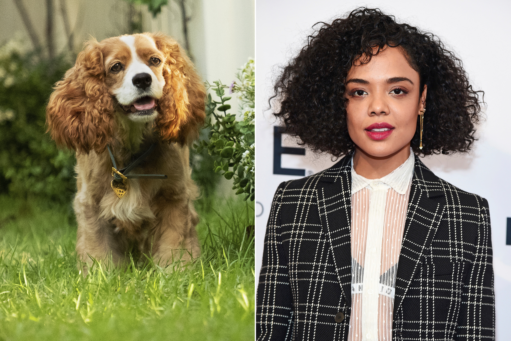 Rescue Dog To Become Disney Star In Lady And The Tramp Live Action Remake