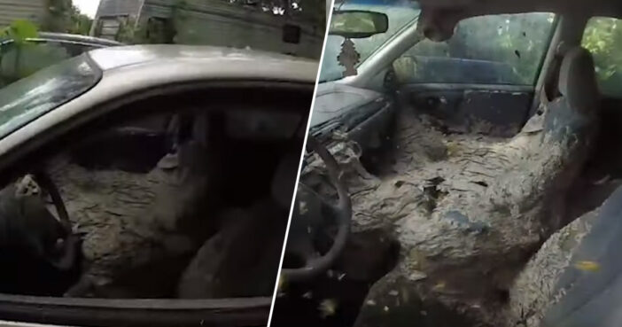 Guy Finds Gigantic Wasp's Nest Inside Eerily Abandoned Car