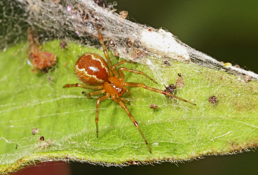 Spiders Will Become More Aggressive Due To Climate Change, Research Finds