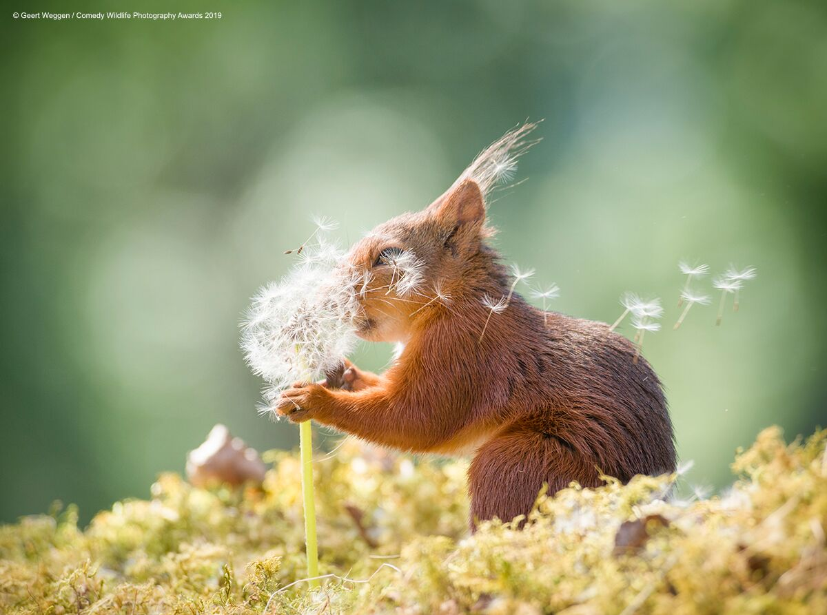 Comedy Wildlife Photography Awards Finalists Announced