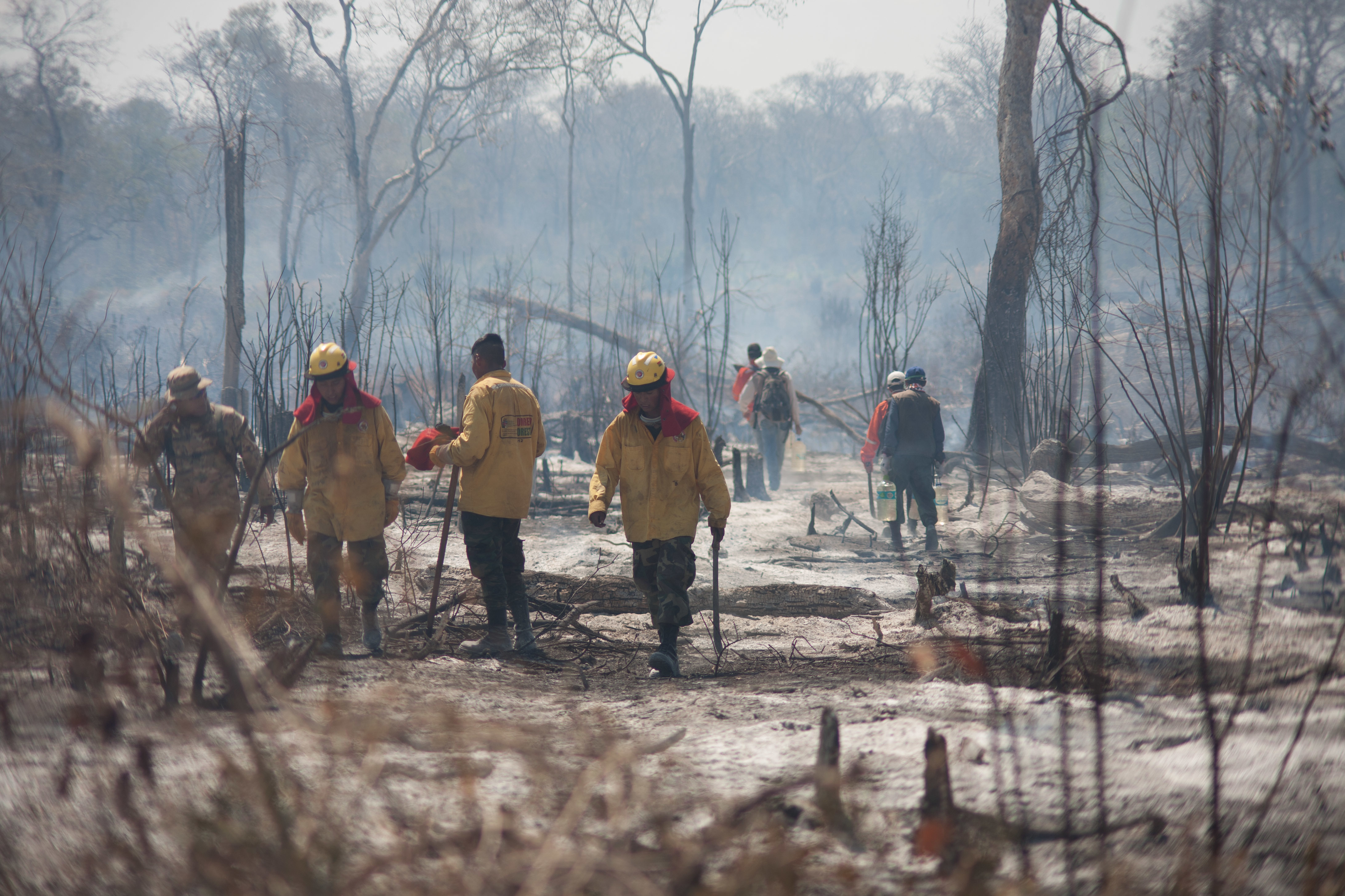 Nearly 2,000 New Fires Have Started In Amazon In Last 48 Hours