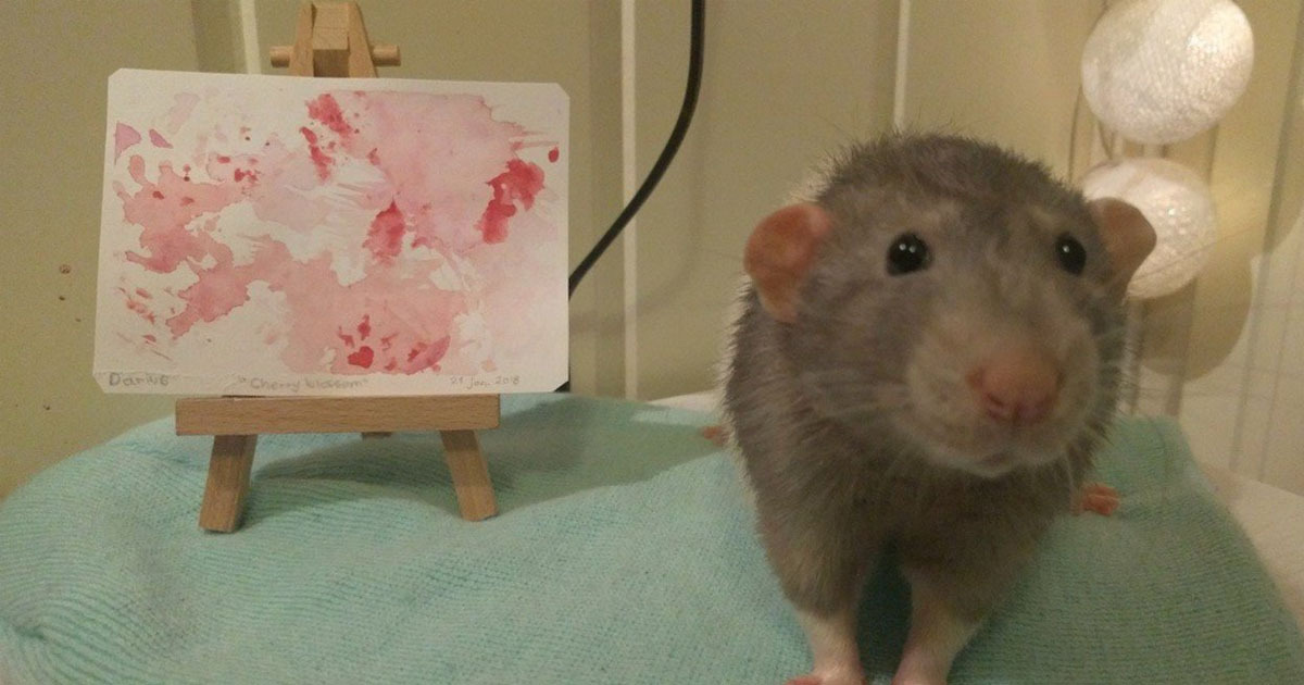pet rat makes painting with feet