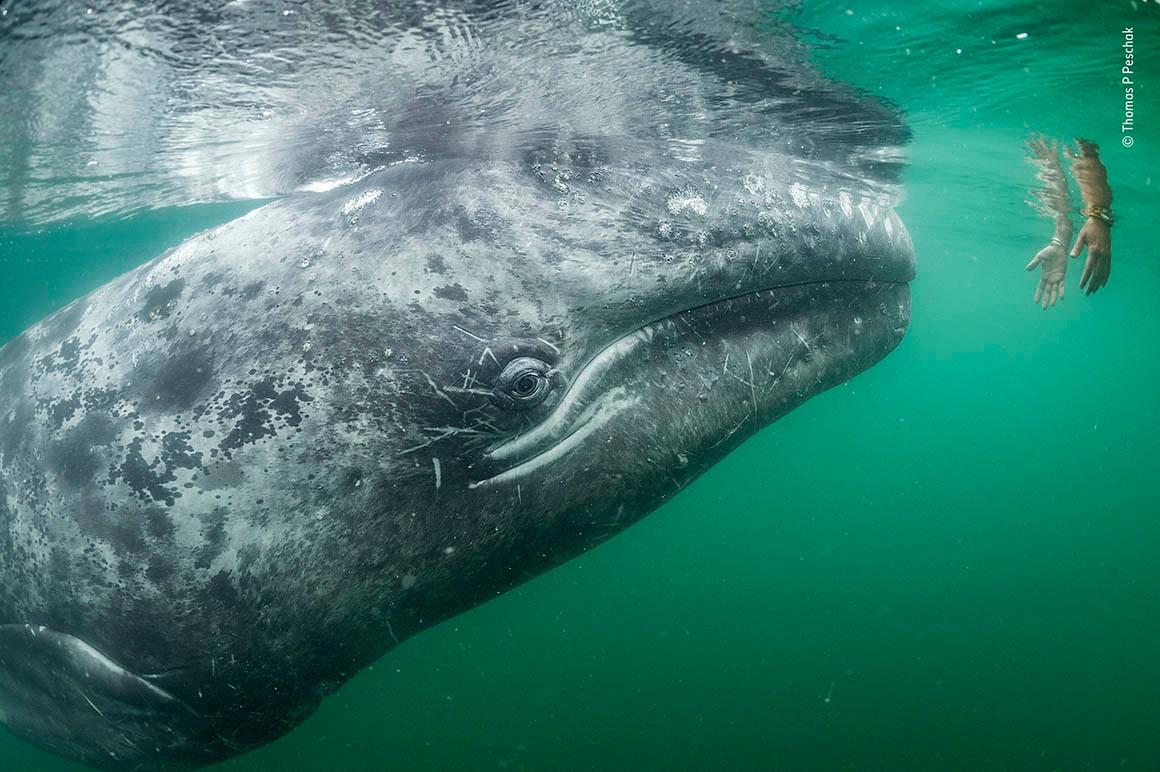 Whale wildlife photography