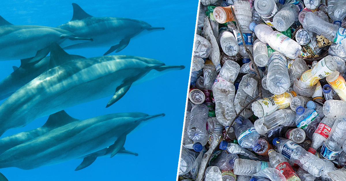 Dolphins in the channel exposed to 'cocktail of pollutants'