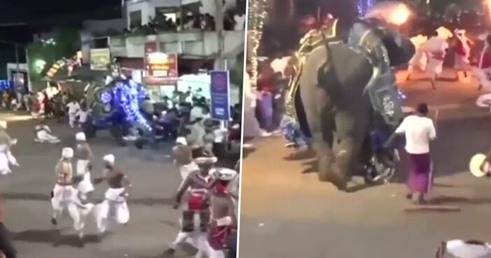 Elephant Injures 17 During Rampage Through Crowd After Being Beaten With Sticks At Festival