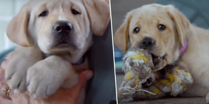 Netflix's Dogumentary About The Training Of Guide Dogs Is Incredible