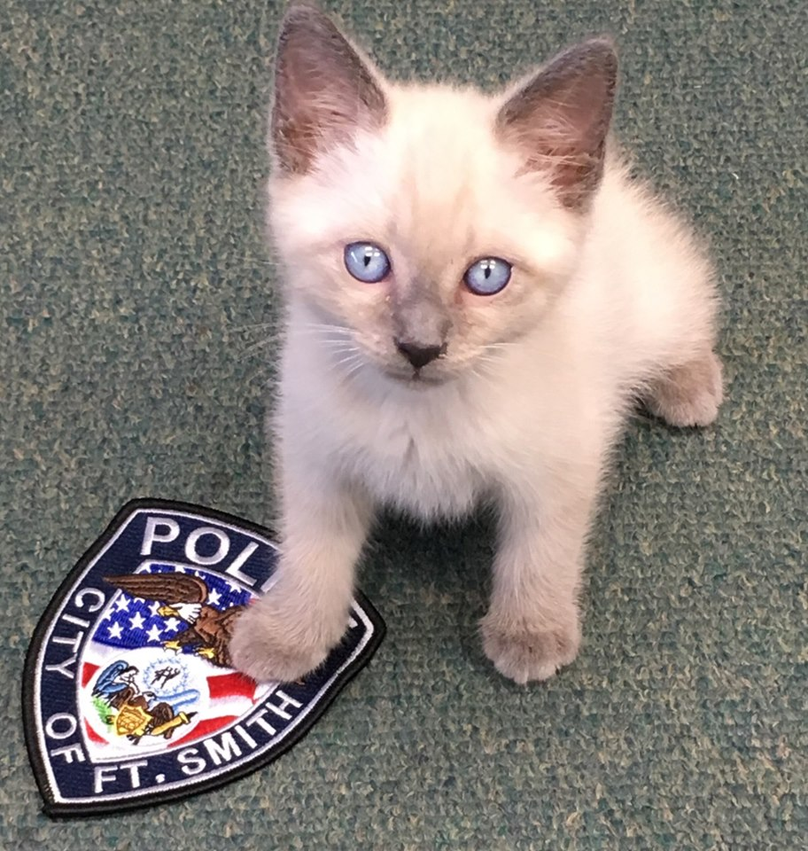 Police Department Ask Public To Name Their Newest Recruit
