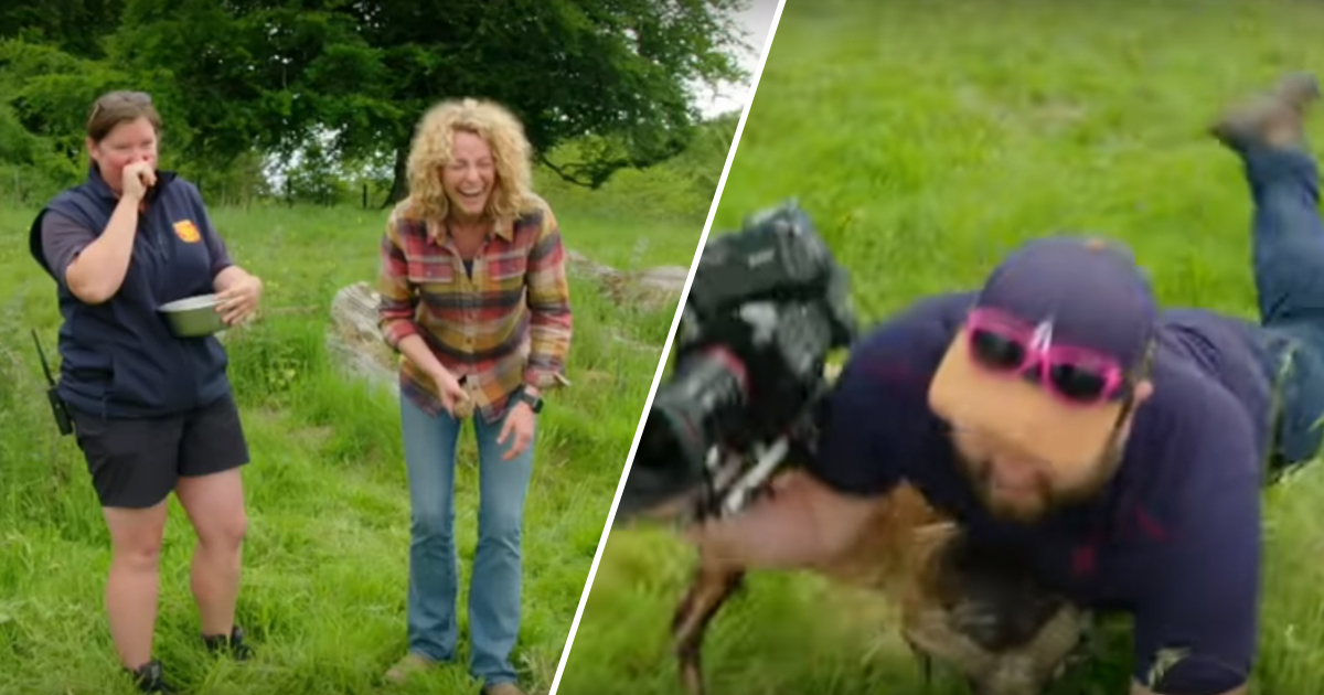 BBC cameraman headbutted in the balls by sheep